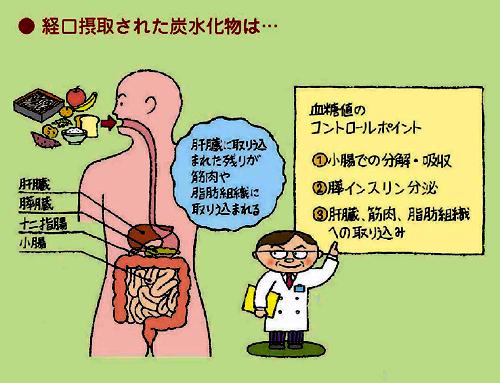経口摂取された炭水化物は